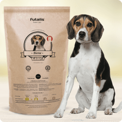 Beagle Futter