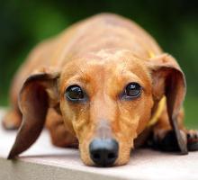 Verdauungsprobleme beim Hund