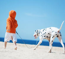 Dalmatiner am Strand