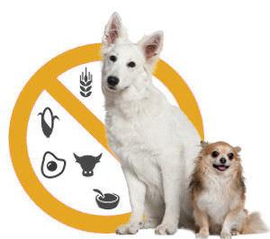 Hundefutter ohne Allergene