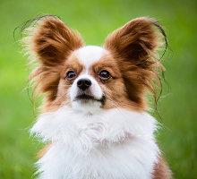 Minirassen Hundefutter