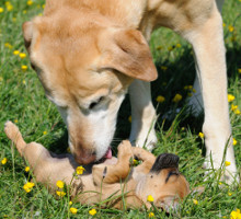 Hund aus dem Tierheim oder vom Züchter
