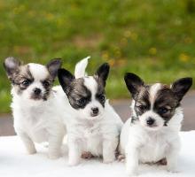 Hundezüchter Checkliste