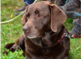 gutes Labradorfutter Bewertung