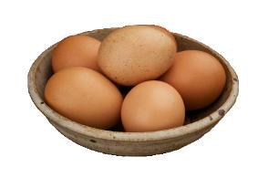 Rohe Eier schädlich für Hunde