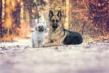 Hundeblog des Monats April 2017