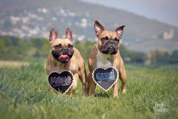 Hundeblog des Monats August 2017
