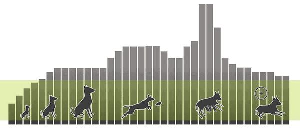 Lebenszyklus eines Hundes