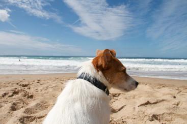 Hundeblog des Monats Juni 2017