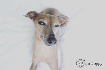 Hundeblog des Monats März 2017