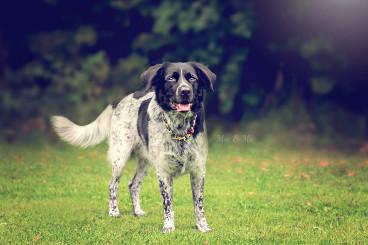 Hundeblog des Monats Februar 2017