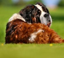 Riesenhund