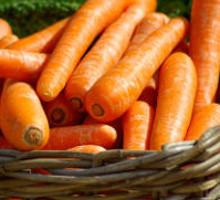 Vegetatisches Futter