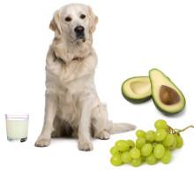 Was dürfen Hunde nicht essen